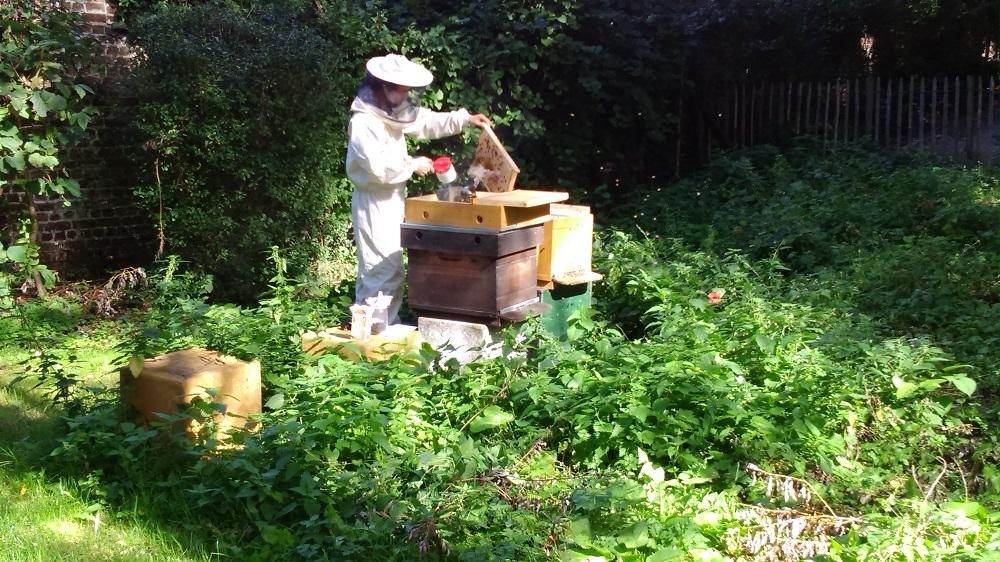 Accueil des ruches